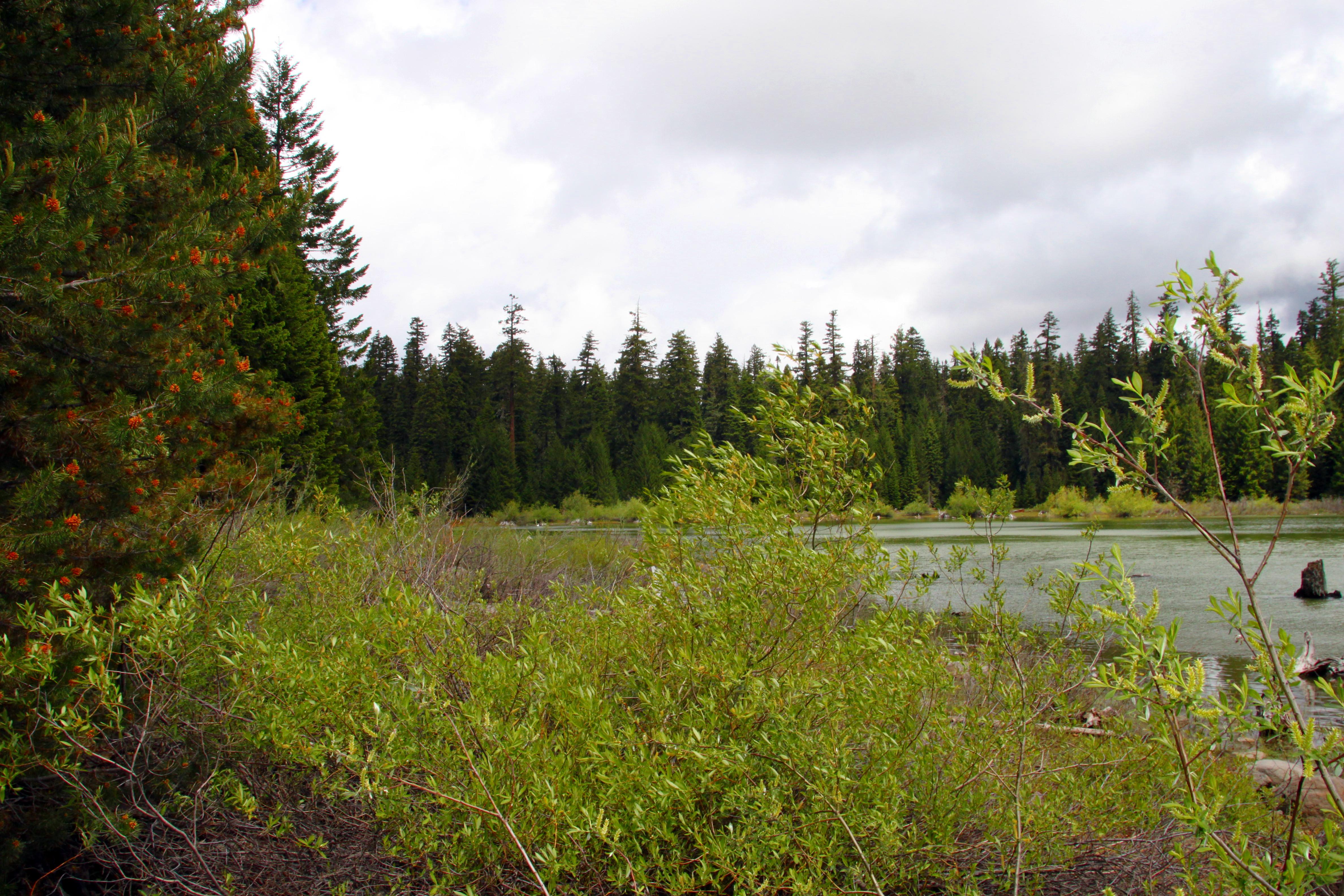 Fish lake west landline real estate llc for Fish lake oregon